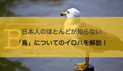 日本人のほとんどが知らない「鳥」についてのイロハを解説!